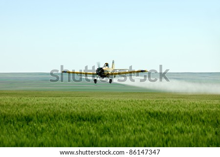 A crop duster airplane flies low over a wheat field spraying fungicide and pesticide.