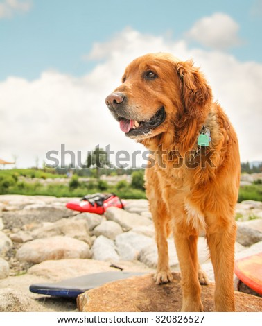 a dog enjoying the outdoors on a beautiful summer day with people kayaking in the river  #320826527