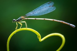 A dragonfly hanging on a heart shaped branch