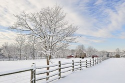 a farm with horses on which snow attacked and one tree on it with snow, and a fence around the farm.