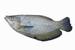 a fish whose skin is peeled because it starts to rot and on top of the skin of the fish that peeled off there is an ant