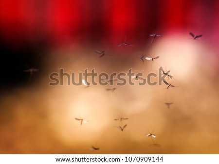 a flock of buzzing harmful and dangerous mosquitoes flying in the air against the backdrop of the evening sunset sky #1070909144