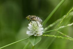 a fly perched on a weed flower
