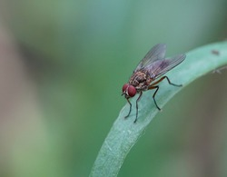 A fly sitting on a blade of grass