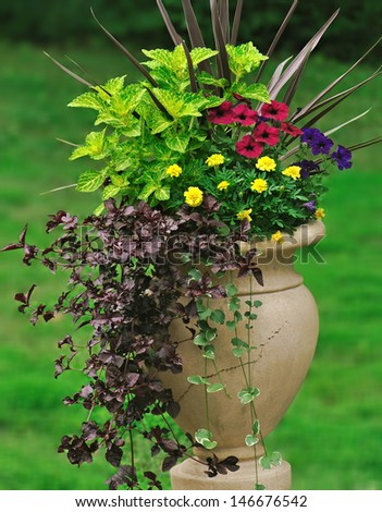 A greek jar garden container featuring an interesting combination of foliage pants, flowers, and trailing vines. #146676542