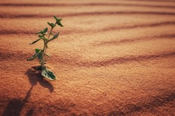 A growing plant on a dry desert land for spring season concept. Classic vintage and soft glow effect