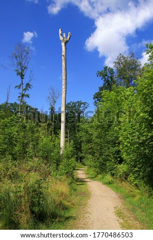 A hiking trail of ghost forest (Gespensterwald) Nienhagen, Baltic Sea - Mecklenburg Western Pomerania, Germany  stock photo