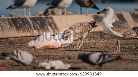 a hungry gull finds itself...