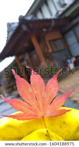 葉っぱ, a leaf in winter ストックフォト ©