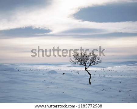 A lonely tree in vast open landscape in the arctic tundra landscape in    cloudy winter's day