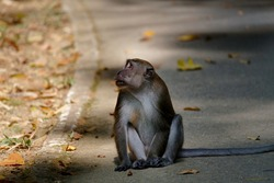 A Macabre monkey looking out for intruders.