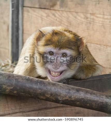 A monkey #590896745