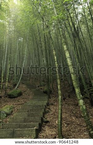 a path through a green bamboo forest