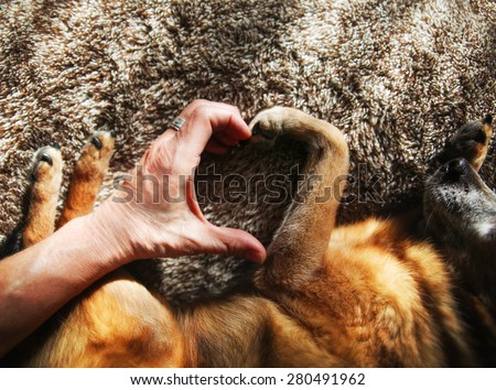 a person and a dog making a heart shape with the hand and paw in natural sunlight with rays of sunshine