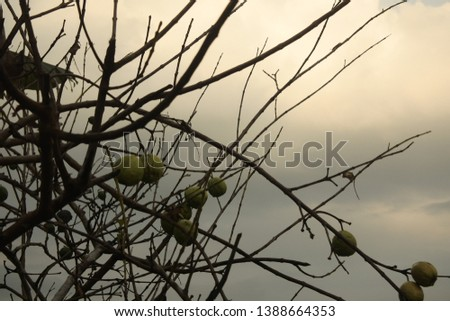 a photo that has many branching branches #1388664353