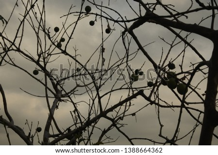 a photo that has many branching branches #1388664362