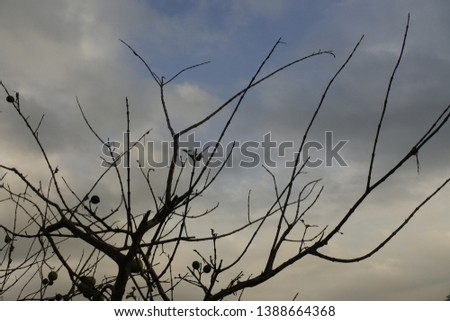 a photo that has many branching branches #1388664368