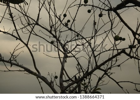a photo that has many branching branches #1388664371