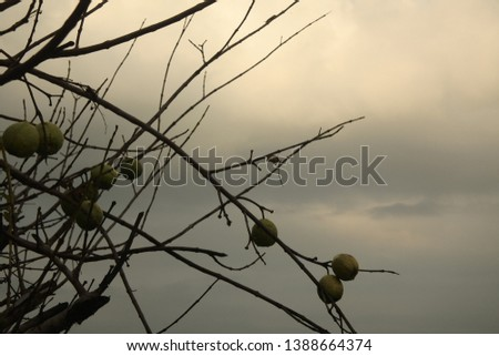 a photo that has many branching branches #1388664374