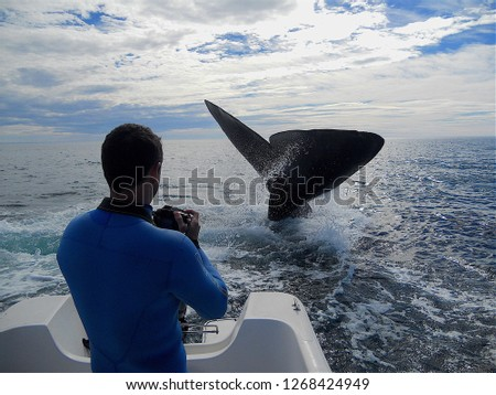 A photographer is ready to take a picture of a whale´s tale in Argentina. South America