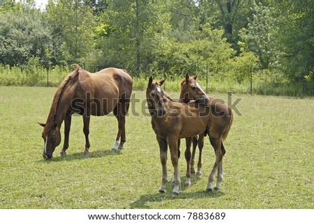 a picture of two young colts and their mother in a horse farm in indiana