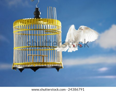a pigeon escape from cage for freedom