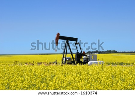 A pump jack in a canola field in southern alberta. Could possibly be used to demonstrate both fossil and renewable fuels (like canola based bio-ethanol)
