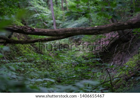 a ravine in the forest