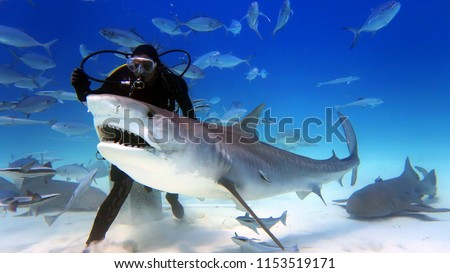a scuba diver feed a very big tiger shark. concept of travel and diving tools. love for nature and oceans. #1153519171