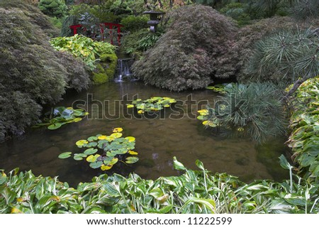 A shallow charming pond with lilies in Japanese  garden of the big park