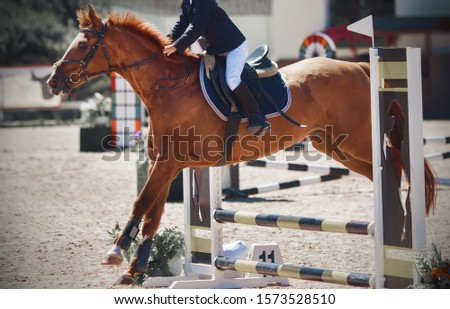 A sorrel pretty pony with a rider in the saddle jumps over a low barrier at a show jumping competition on a bright Sunny day.