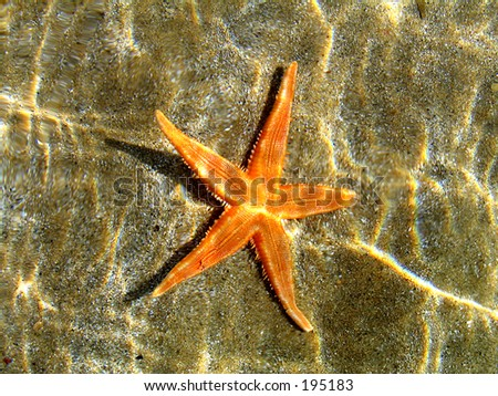 A starfish in clear shallow water