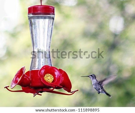 a tiny hummingbird getting a drink at a backyard feeder full of sugar water nectar