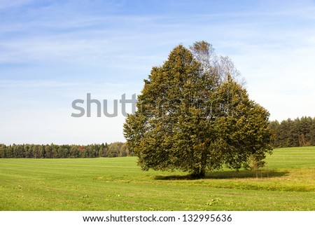 a tree growing in a field in summertime of year