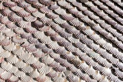A wall covered of scallop shells in a beautiful pattern. Bottom composed of dozens of scallop shells on a wall. The lines that their junction makes form a very beautiful abstract.San Sebastián chapel