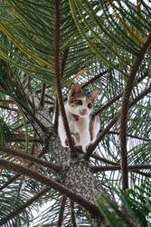 A white cat climbing a pine tree