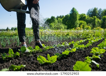 A young girl waters a salad in the garden. Growing plants and vegetables in the village. Eco cultivation in backyard Stockfoto ©