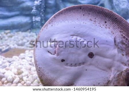 About sea fish and fresh water fish in Aquarium  #1460954195