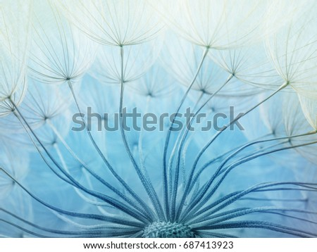 Abstract macro photo of dandelion seeds.