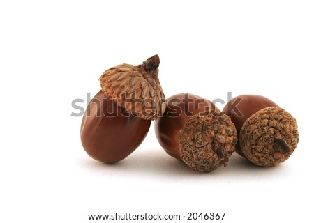 """""""Acorns� � One acorn in charge, two working acorns. Soft shadow. - stock photo"""