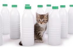 adorable little tabby kitten playing in plastic milk bottles on white isolated studio background