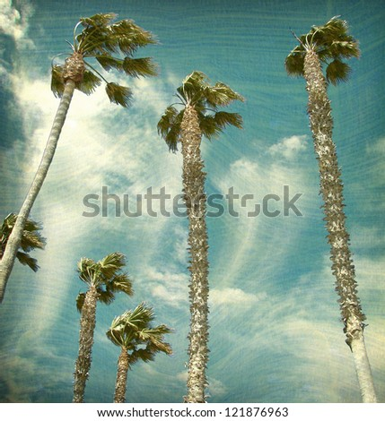 aged and worn vintage photo palm trees
