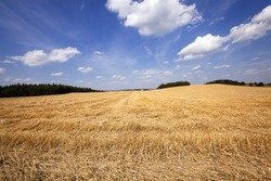agricultural field on which there passed the harvest company of wheat