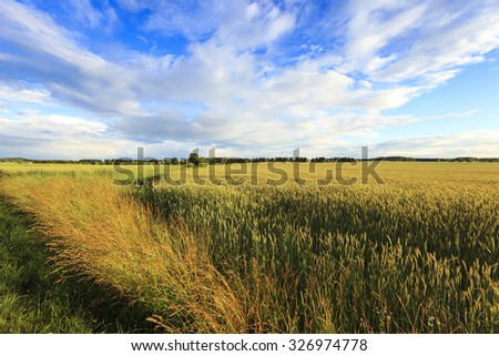 agricultural field on which unripe green grass grows #326974778