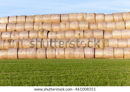 Agricultural field on which were left lying Straw Haystacks after the wheat harvest , farming and organic foods, autumn season, blue sky #461008351