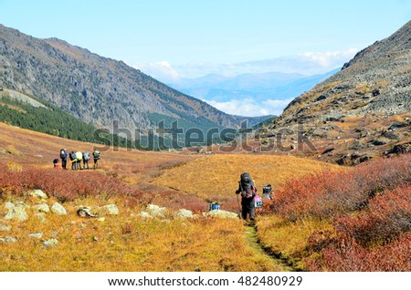 Altai territory, Ust-Koksinsky district, Russia, September, 09, 2016. tourists with backpacks walking along the riverbed of Acchan (Akchan) in september #482480929