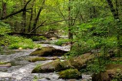 an brook flowing through the wilderness of willard brook state forest in townsend mass.