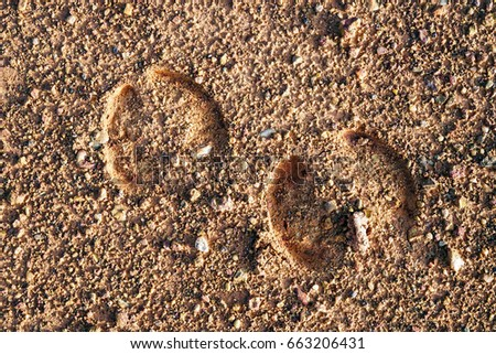 Animal footprint                                                             #663206431