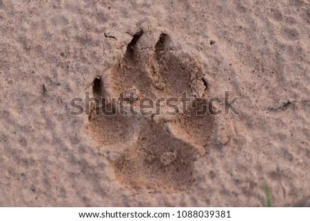 Animal Footprints background #1088039381