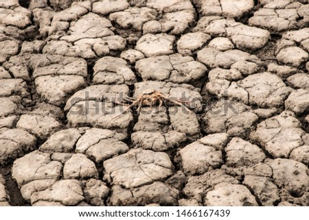 Animals affected by drought , Effects of global warming.